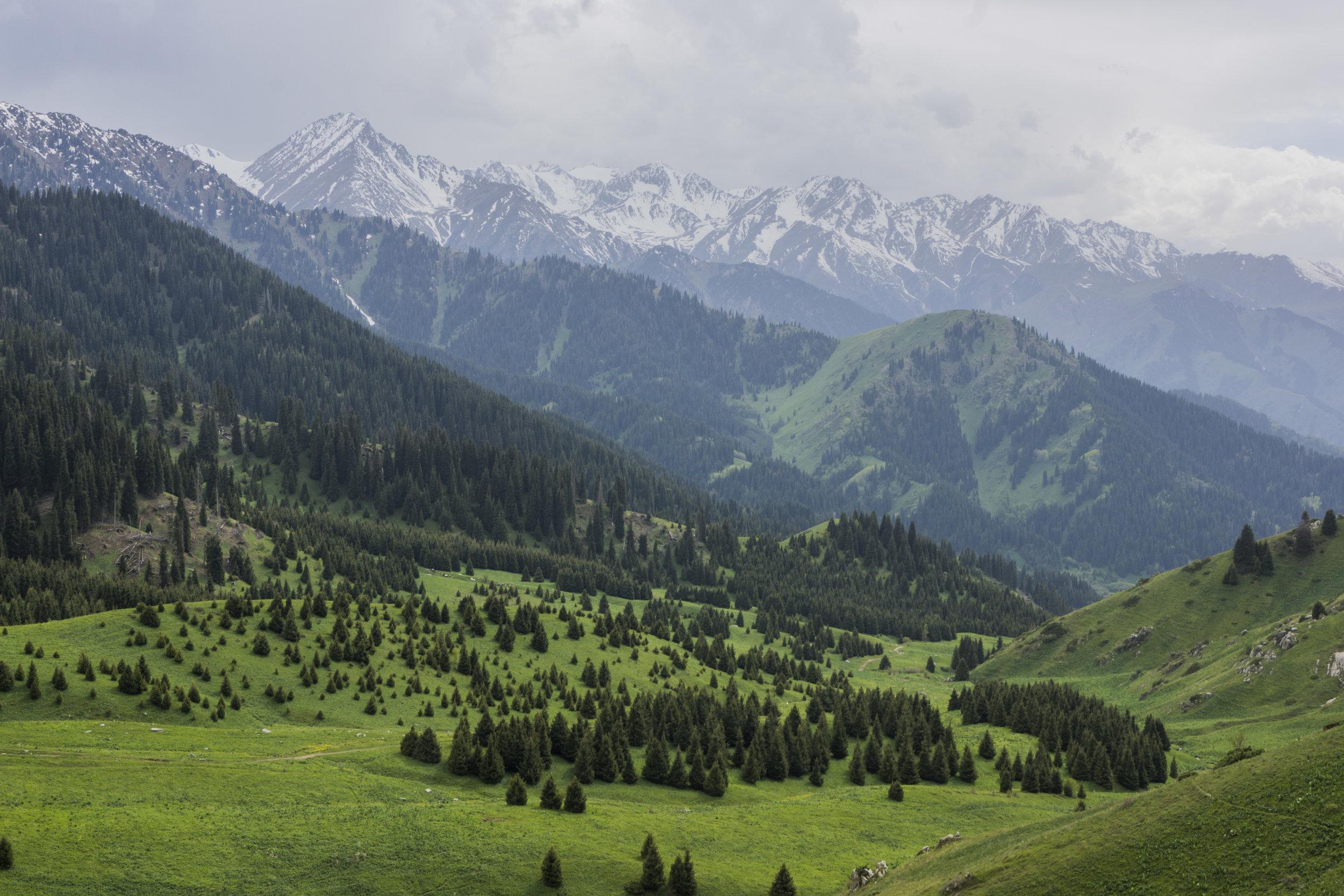 Kok Zhalau, Almaty region, Kazakhstan.