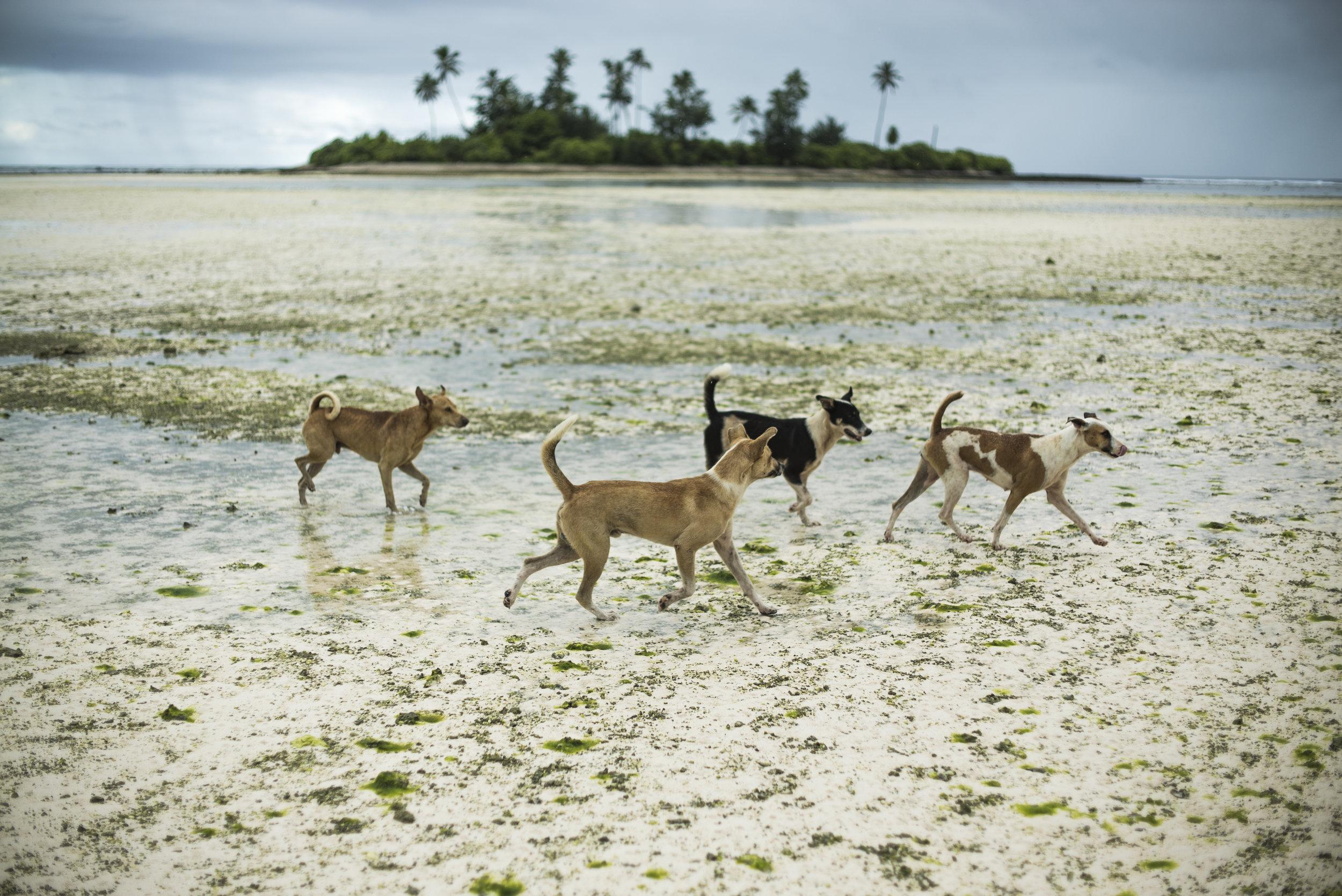 Low tide, South Tarawa, Kiribati.
