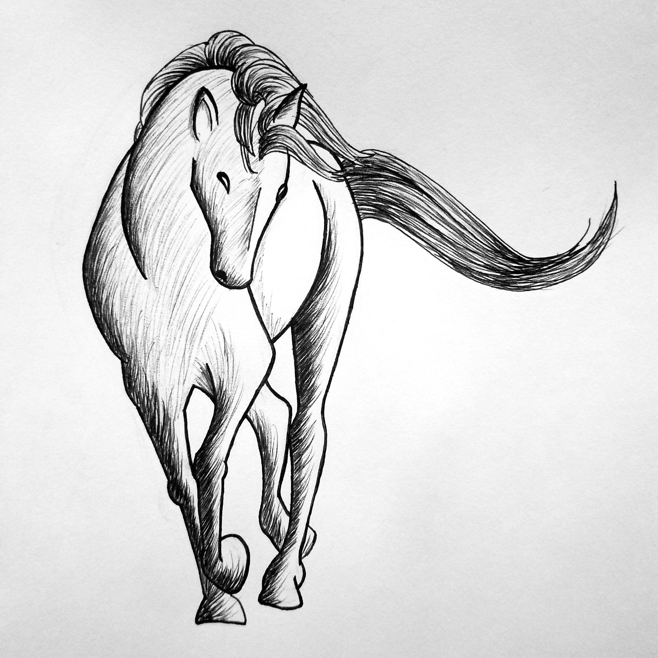 Day 8: Horse