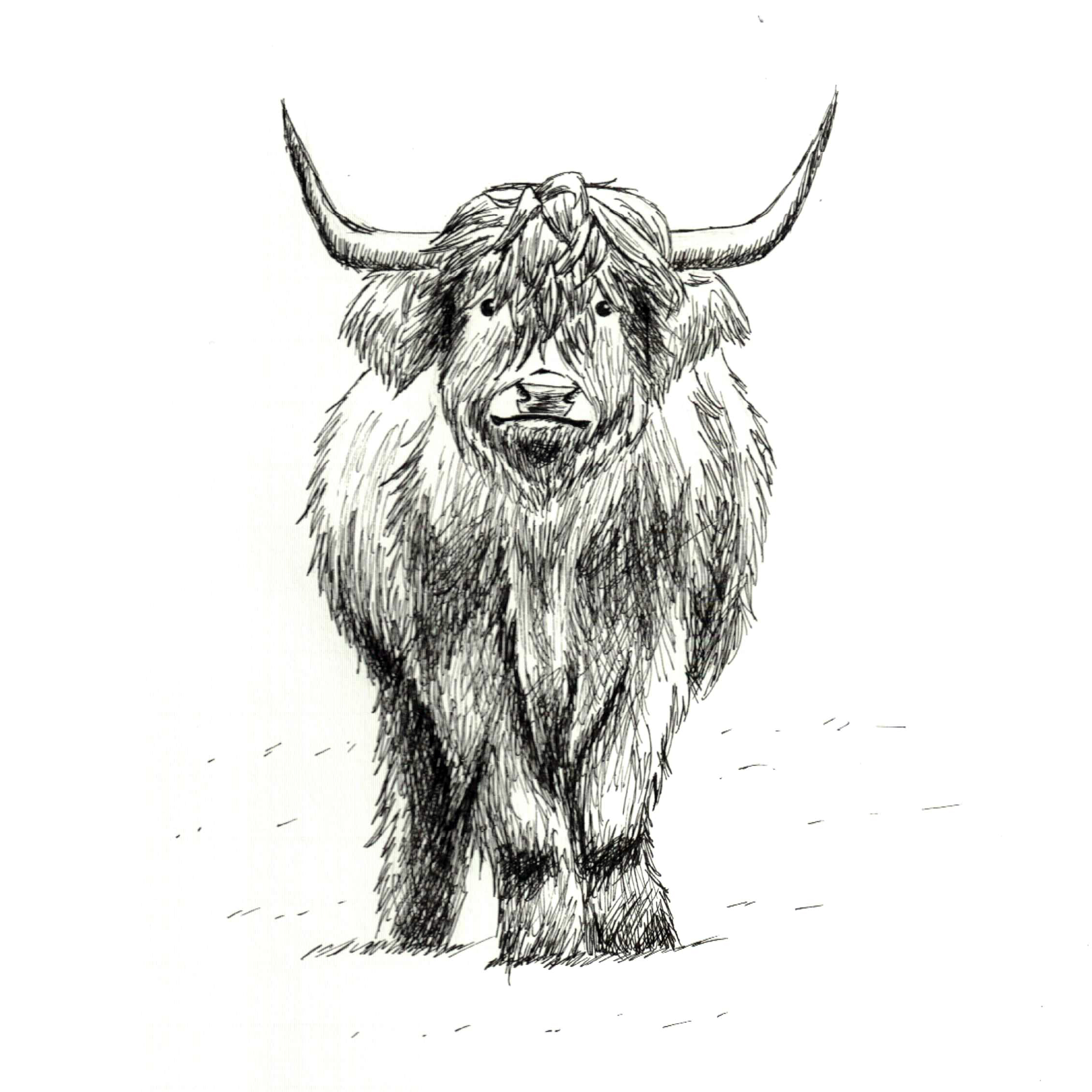 Day 13: Cow