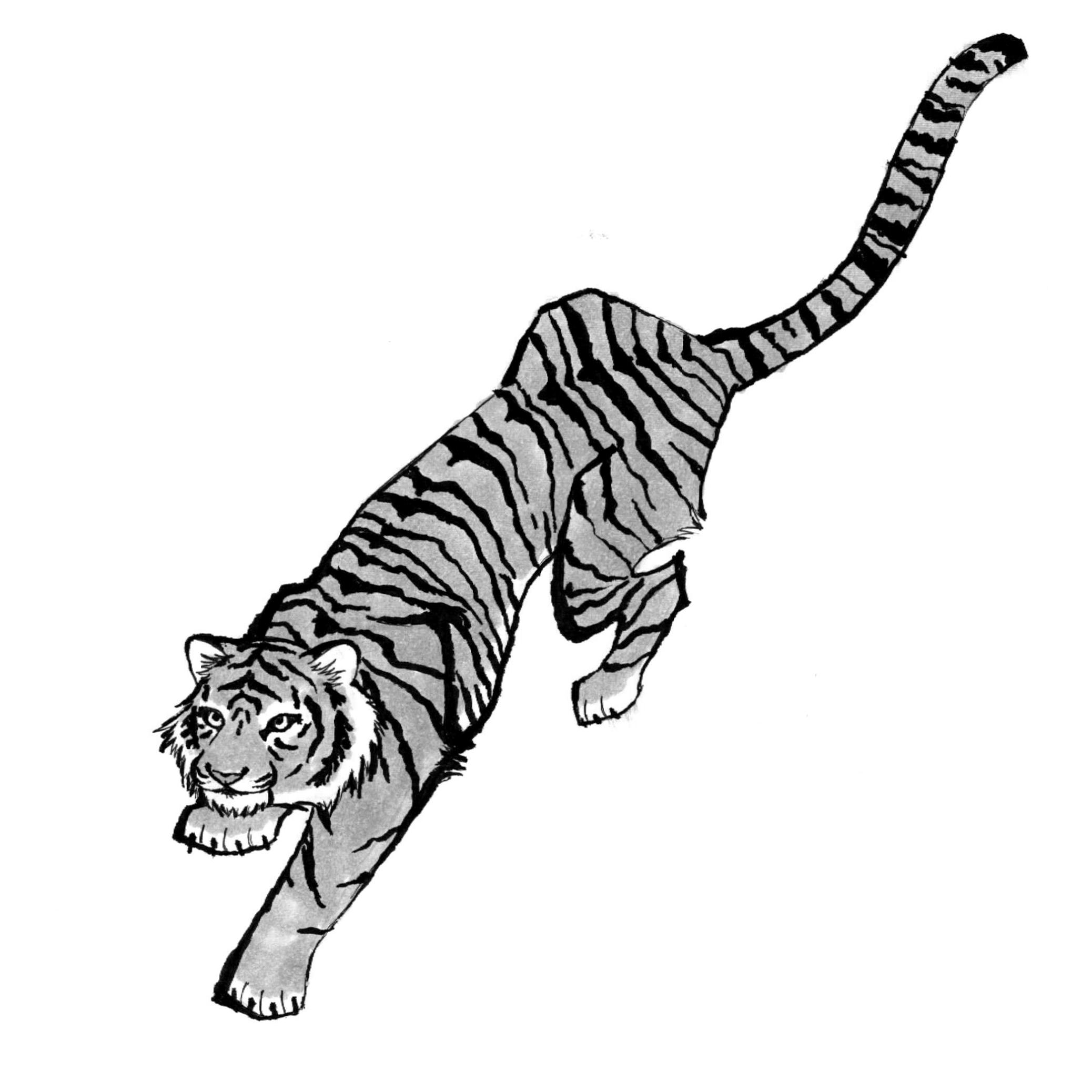 Day 27: Tiger