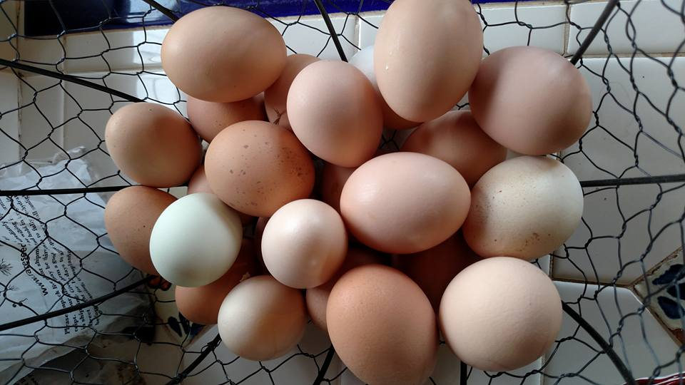Farm fresh eggs from pasture-raised chickens