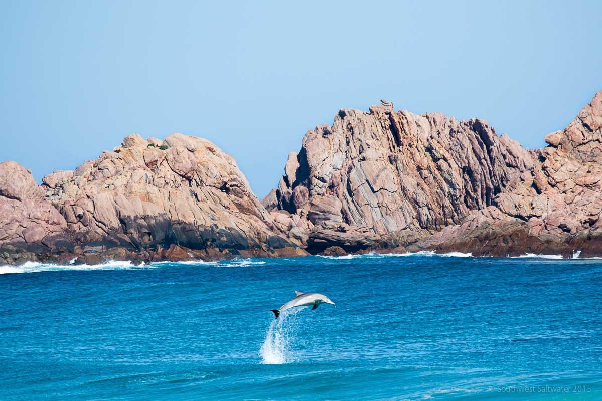 Frothin-Dolphin.jpg