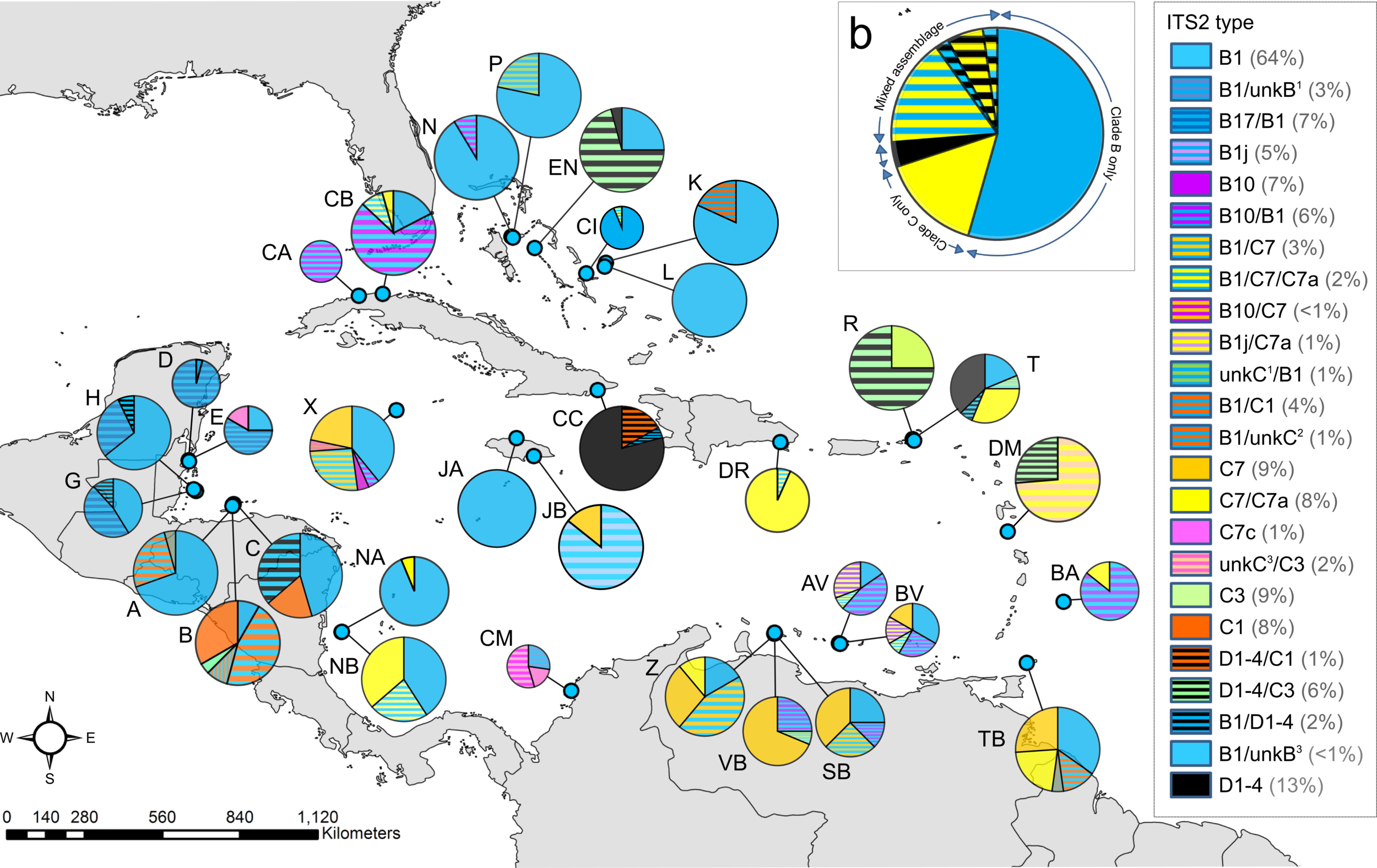 - Map of the Caribbean and Bahamas showing Symbiodinium B types (blue colours), C (yellow) and D (black) types, and combinations (stripes) hosted by Orbicella annularis populations on 33 different coral reefs. Only dominant types (or combinations of types) are represented. Pie chart size reflects colony sample size (minimum 11, maximum 24, total 632), numbers in parenthesis indicate proportion of total colonies that each type was dominant in. More blue (clade B) is apparent in the northwest and Bahamas, with more mixed assemblages dominated by clade C (yellow) in the southeast and Lesser Antilles. Inset: pie chart representing clade types found hosted by O. annularis for the entire Wider Caribbean area.