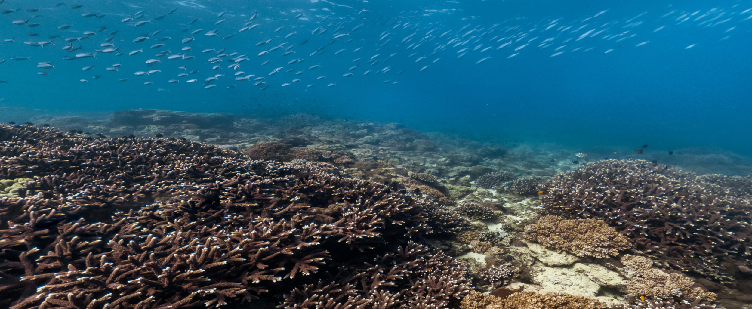 Jump in for a virtual dive - On Flinders Reef