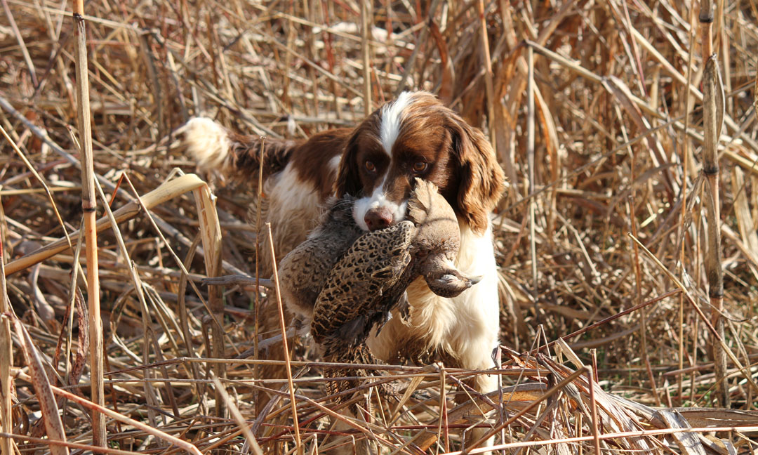 20120303 Wounded Warrior Pheasant Hunt 11.JPG