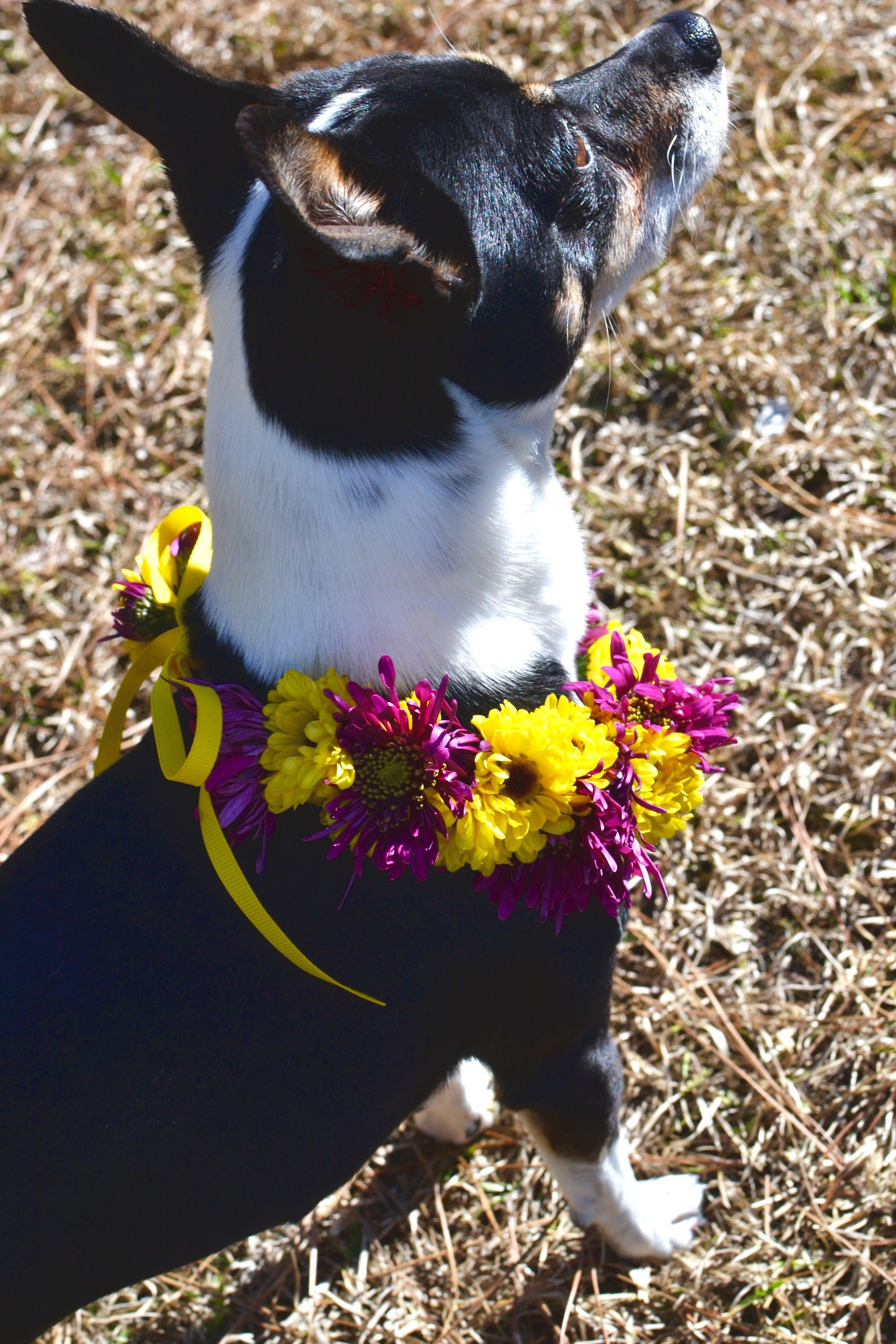 Custom BLYTHE Fresh Floral Halo for DOGS