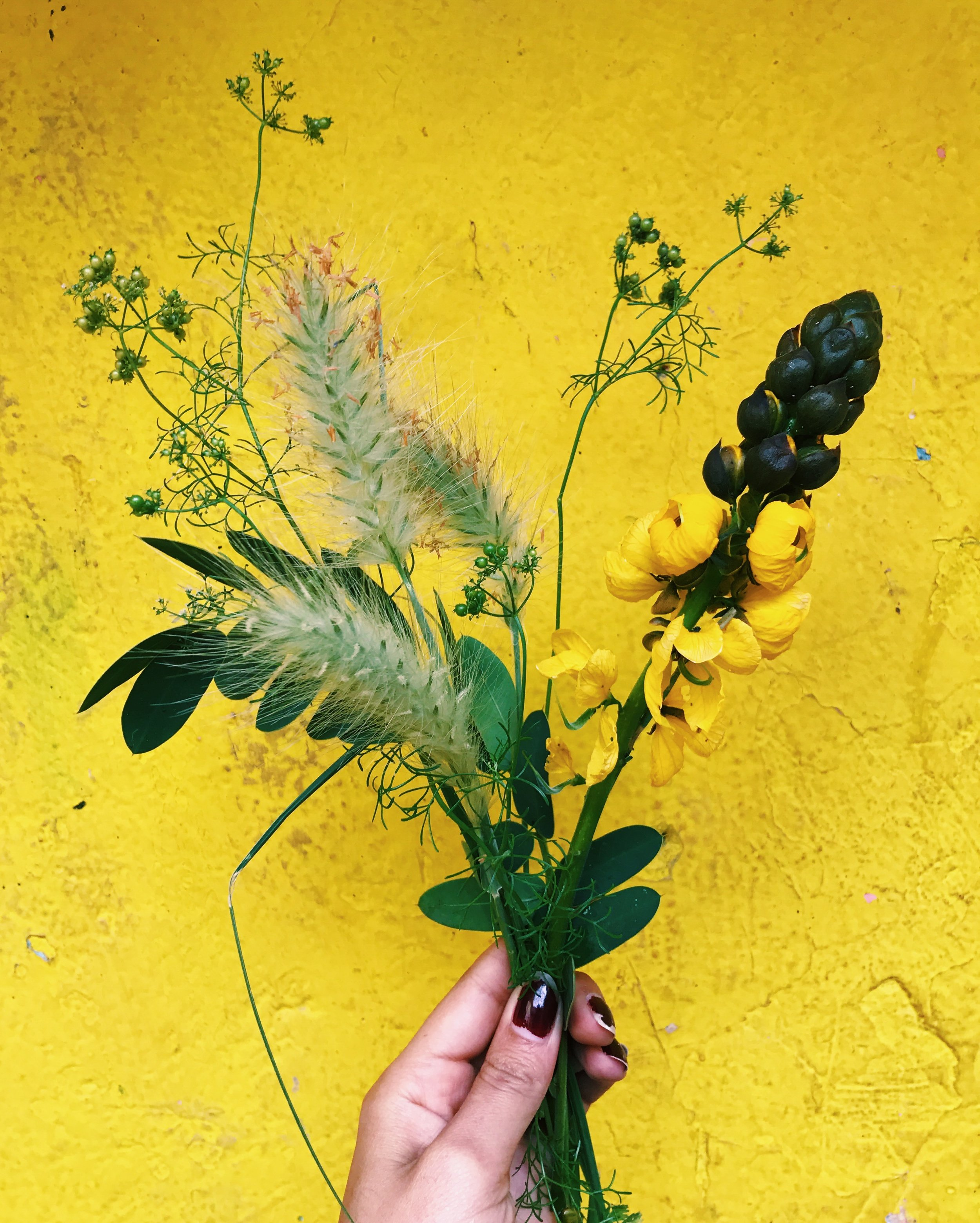 Some stuff from around the block - cilantro seed pods, bunny tails, and some pretty yellow flowers that smell just like buttered popcorn!