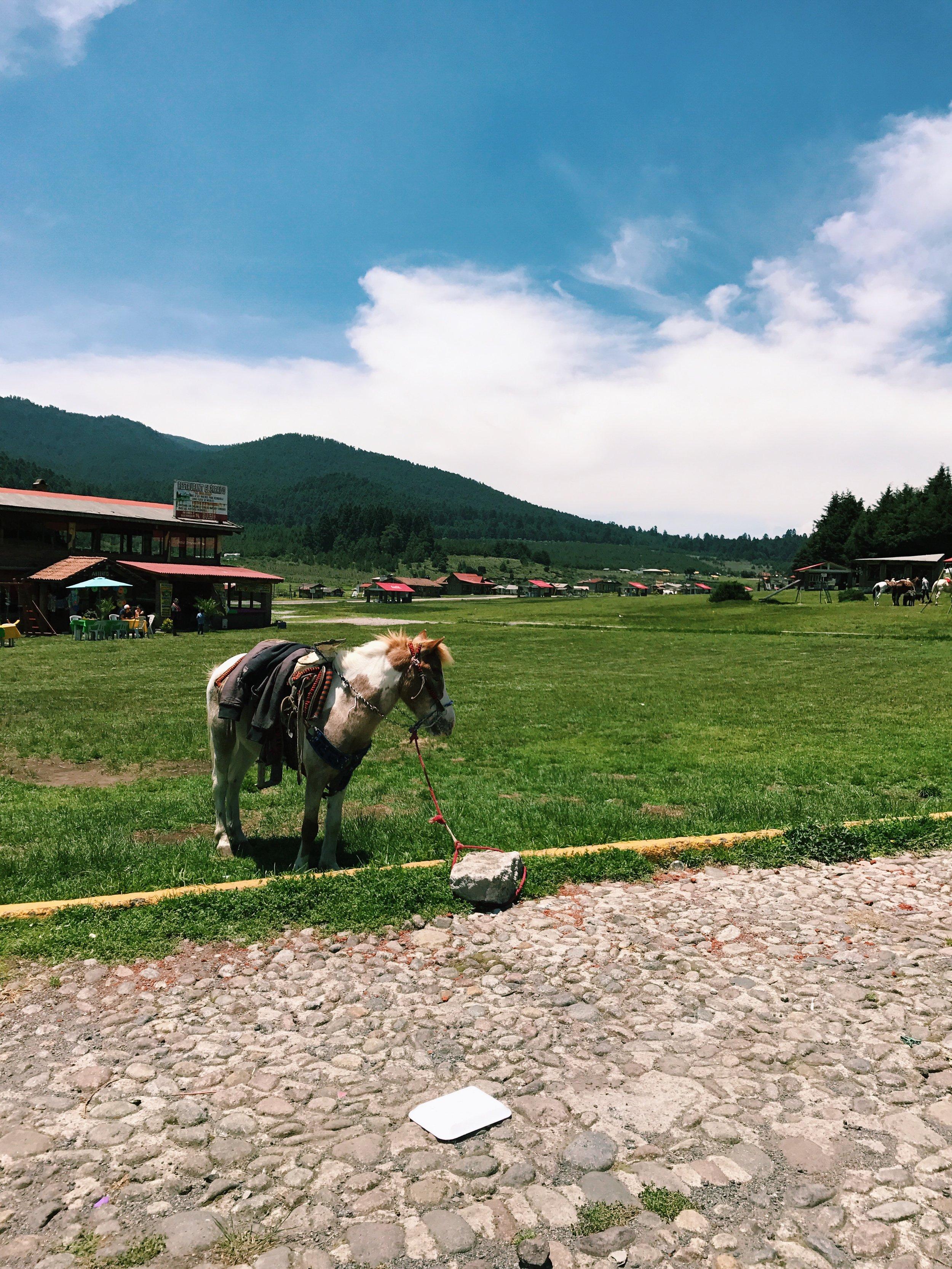 A lone pony.