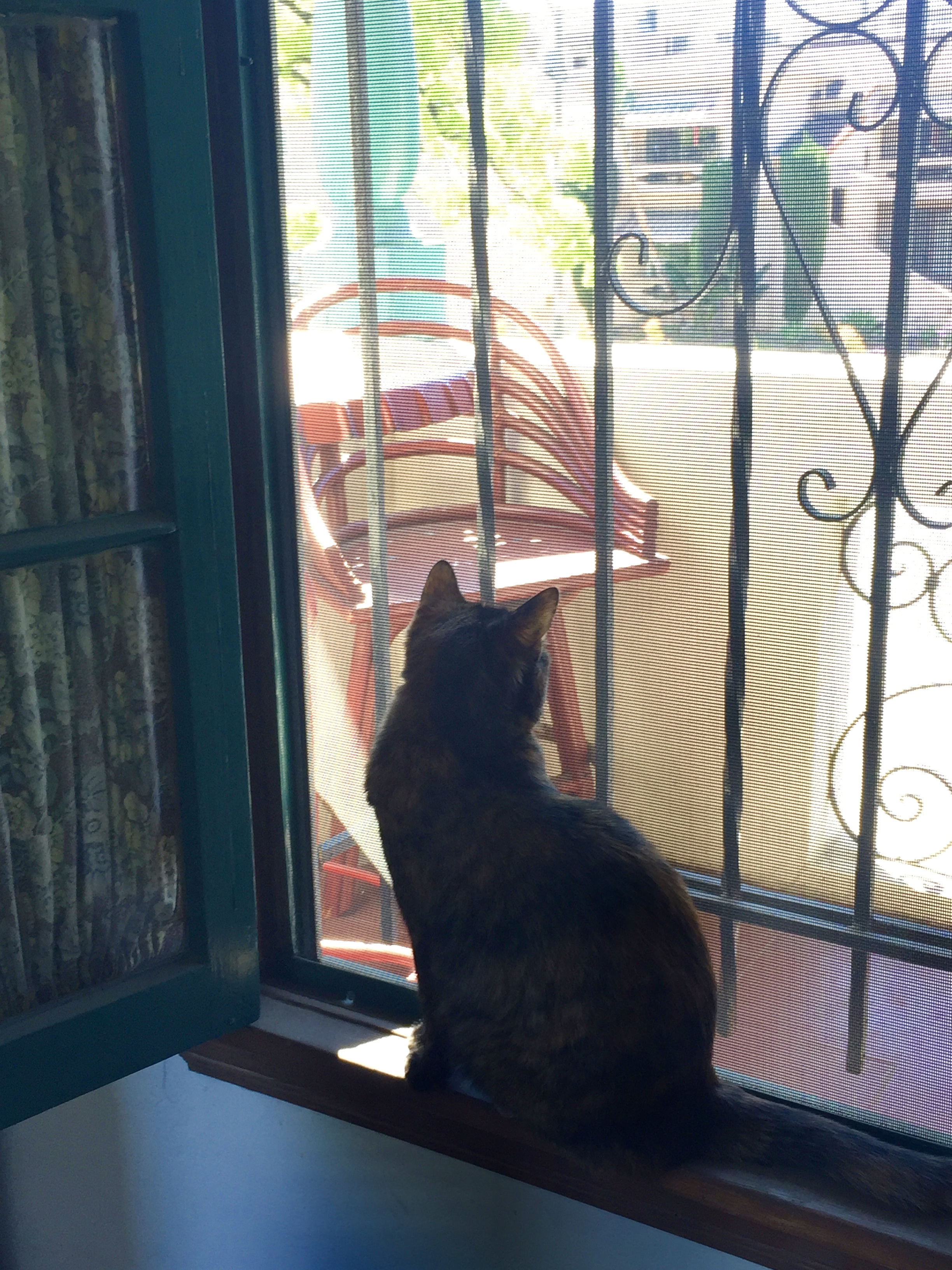 DORA BY THE WINDOW, APRIL 1, 2017 - Los Angeles, CA