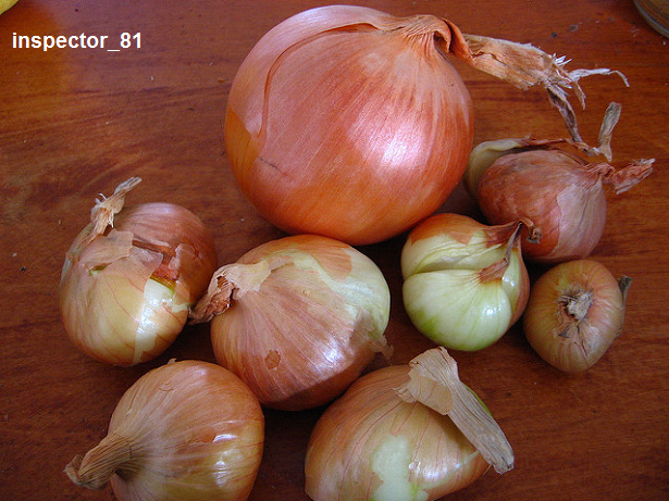 onionboys.png
