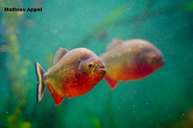 fookin fish.png