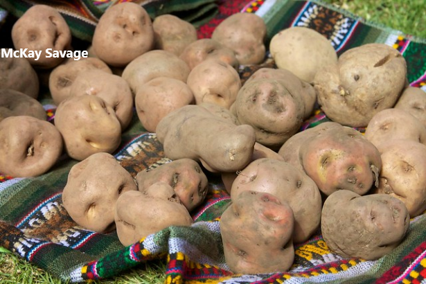 7 - Patate.png