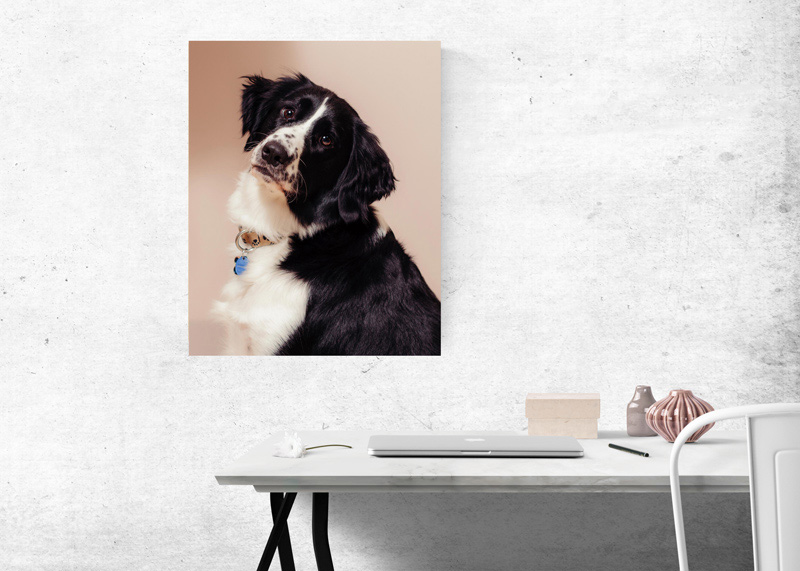 Image of wall art taken by Orlando Pet Photography