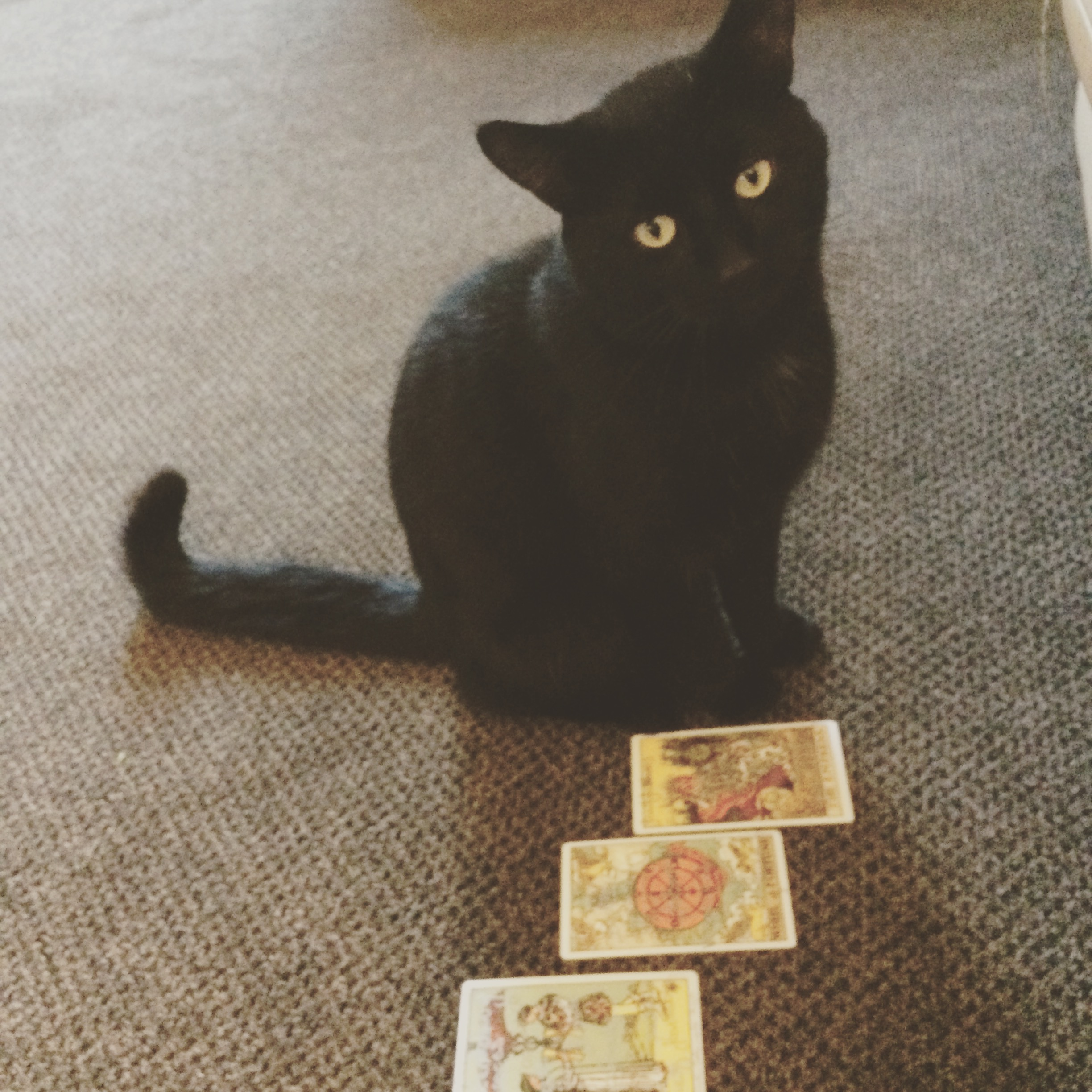 Black cats can be a sign of good or bad luck depending on how you view them (Tarot cards not always included!)