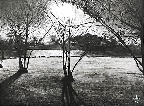 "The Light Between the Trees   Charcoal on illustration board   18X24"" 2014"