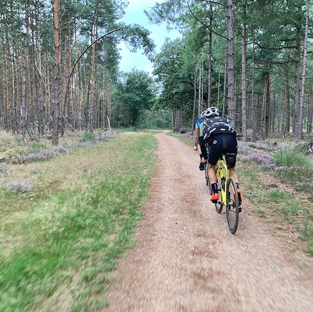 Roads of the last weeks #gravelgrinding #pathfindergiro #leenderheide #strabrechtseheide #logarskadolina #mangartskosedlo #rogla  #vrsic #pathslikethese