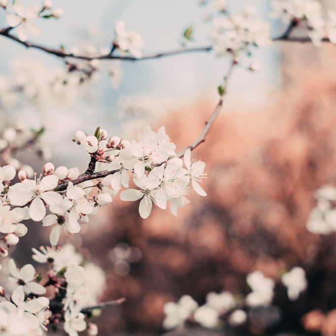 Kukkia, kukkia…