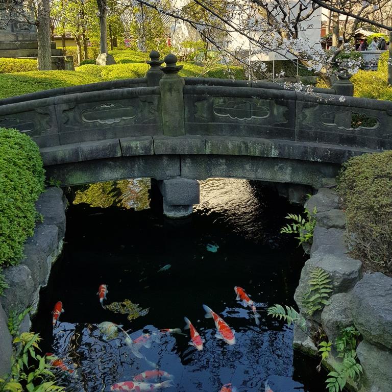 Sensoji-temppelin karpit