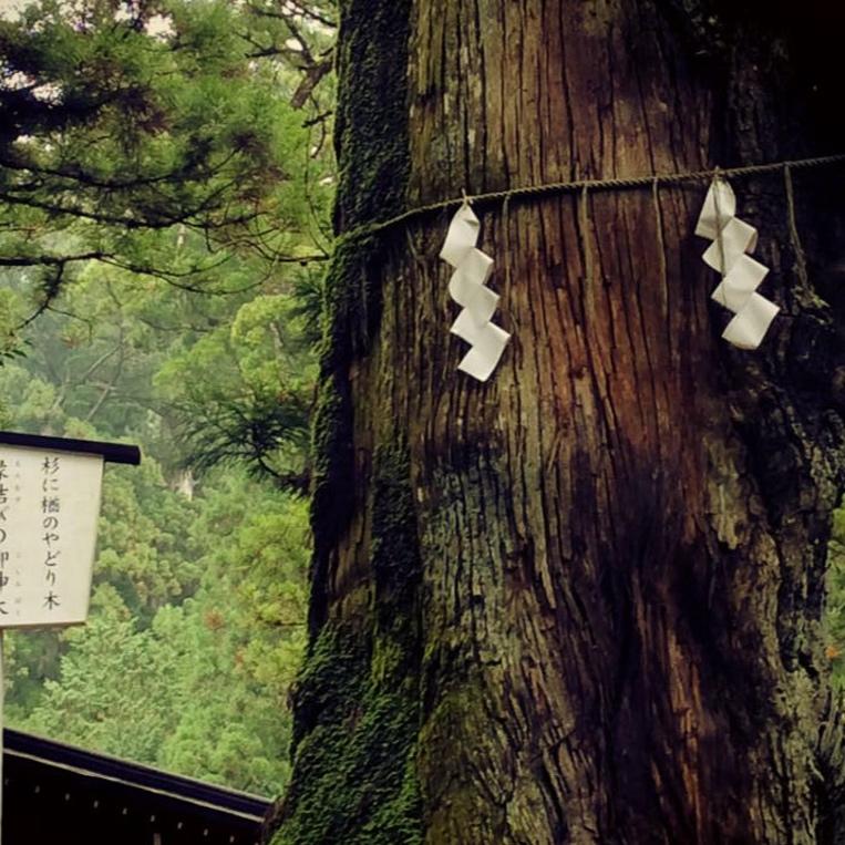 Pyhiä puita