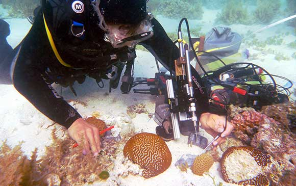 Microalgal photosynthesis & ecology - The image shows a diver using microsensors to study oxygen evolution and the physico-chemical microenvironment of corals in situ.