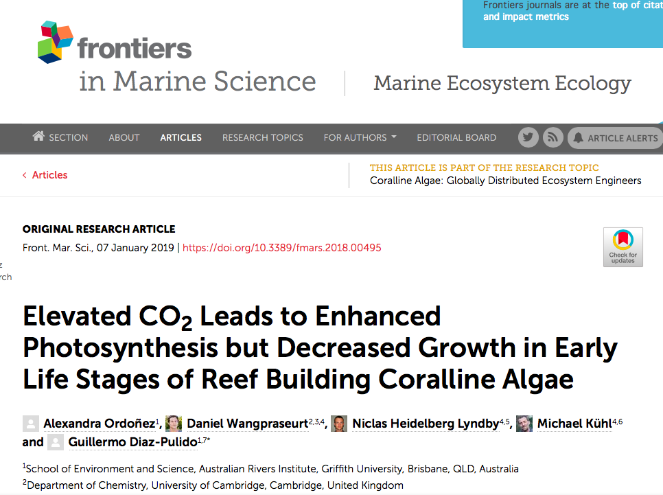 NEW PAPER IN FRONTIERS IN MARINE SCIENCE    7 JANUARY 2019    ABSTRACT:  Crustose coralline algae (CCA) are key organisms in coral reef ecosystems, where they contribute to reef building and substrate stabilization. While ocean acidification due to increasing CO2 can affect the biology, physiology and ecology of fully developed CCA, the impacts of elevated CO2 on the early life stages of CCA are much less explored. We assessed the photosynthetic activity and growth of 10-day-old recruits of the reef-building crustose coralline alga  Porolithon  cf.  onkodes  exposed to ambient and enhanced CO2 seawater concentration causing a downward shift in pH of ∼0.3 units. Growth of the CCA was estimated using measurements of crust thickness and marginal expansion, while photosynthetic activity was studied with O2 microsensors. We found that elevated seawater CO2enhanced gross photosynthesis and respiration, but significantly reduced vertical and marginal growth of the early life stages of  P.  cf.  onkodes . Elevated CO2 stimulated photosynthesis, particularly at high irradiance, likely due to increased availability of CO2, but this increase did not translate into increased algal growth as expected, suggesting a decoupling of these two processes under ocean acidification scenarios. This study confirms the sensitivity of early stages of CCA to elevated CO2 and identifies complexities in the physiological processes underlying the decreased growth and abundance in these important coral reef builders upon ocean acidification