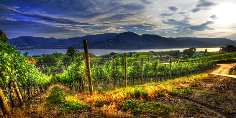 laughing-stock-vineyards-naramata-bench-okanagan-valley-vagabonds