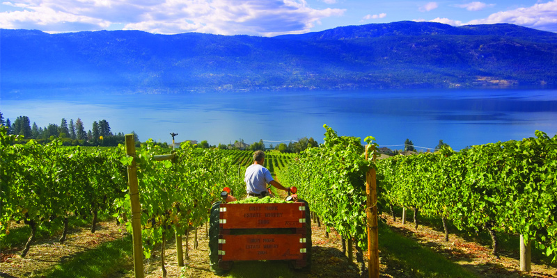 gray-monk-estate-winery-lake-country-okanagan-valley-vagabonds