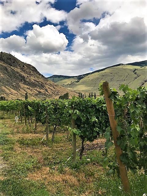 Orofino - home vines.jpg