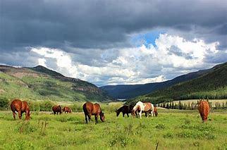 Similameen Roadtrip horses.png