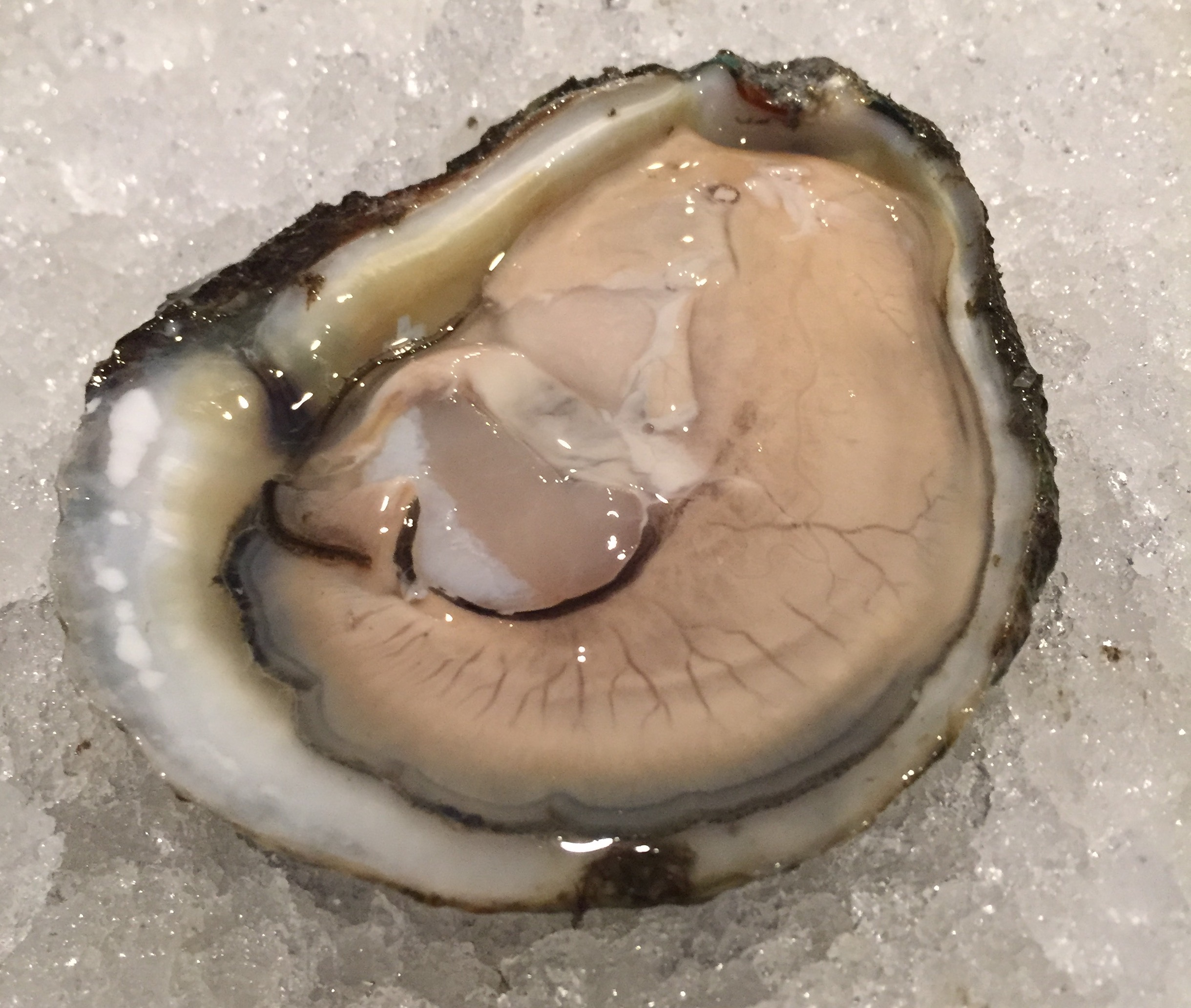 Empire Oysters