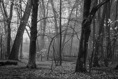 """Grey Wonder"" © Luciana McClure"
