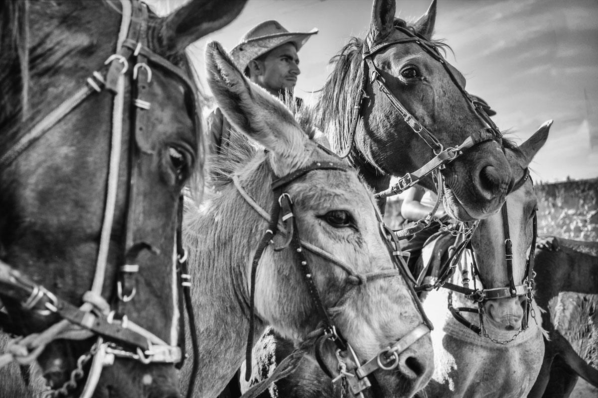 Cavalgados ,Pau Ferro-PE, 2016