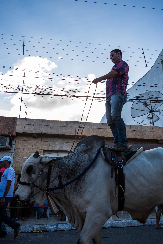 Bull riding, Pau Ferro-PE, 2016