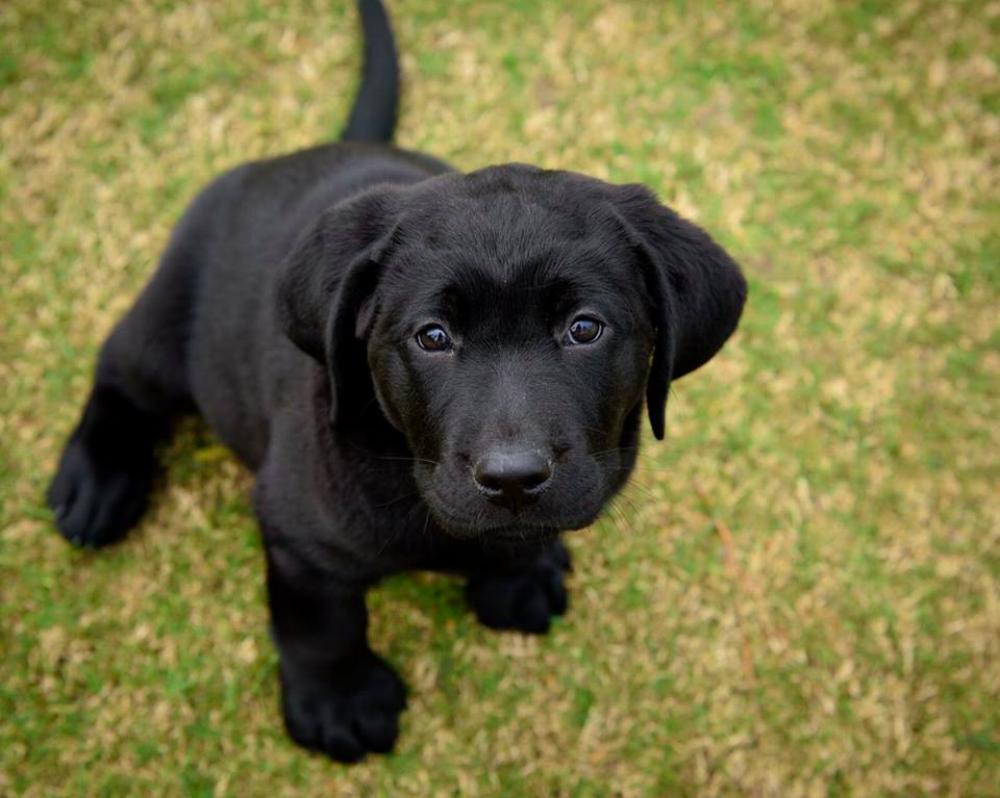BluePath Puppy