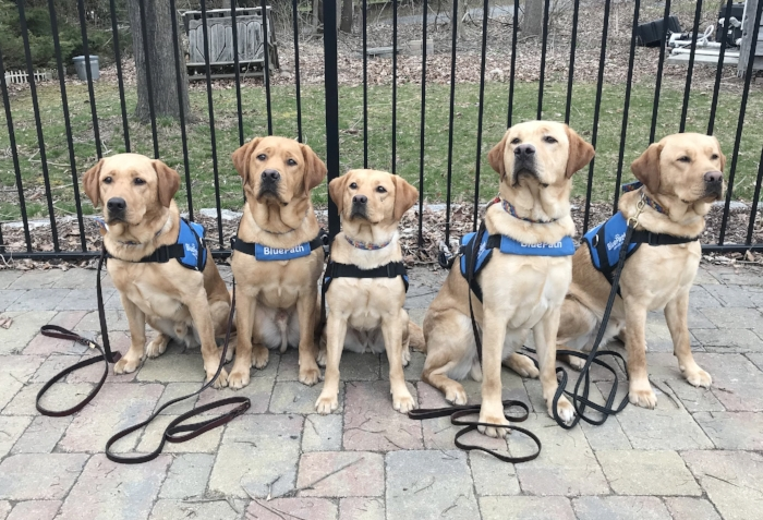 Of course we had to get the Pearl Harbor siblings on their own.  L-R: JP, Sammy, Pearl, Miller and Benni.  We're so proud of these beautiful dogs.