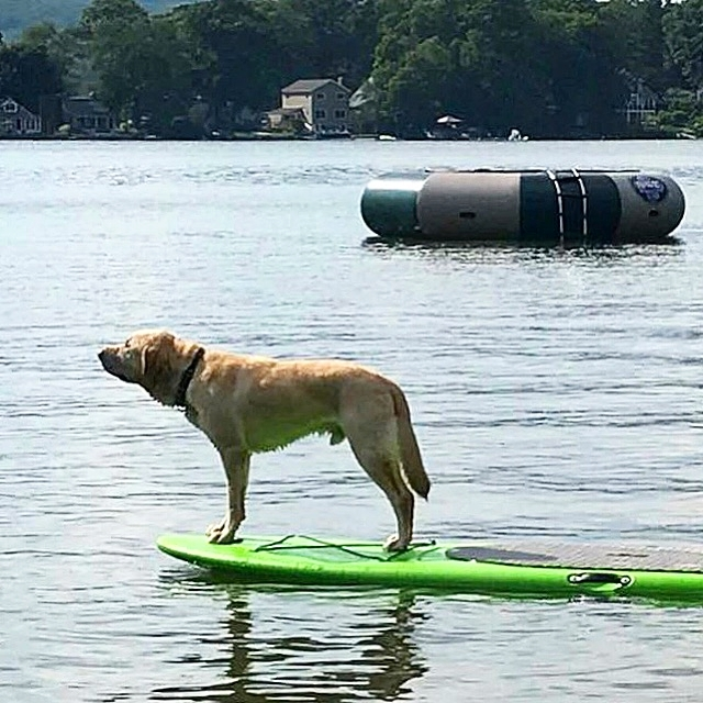 Wrangler... downtime on a paddleboard