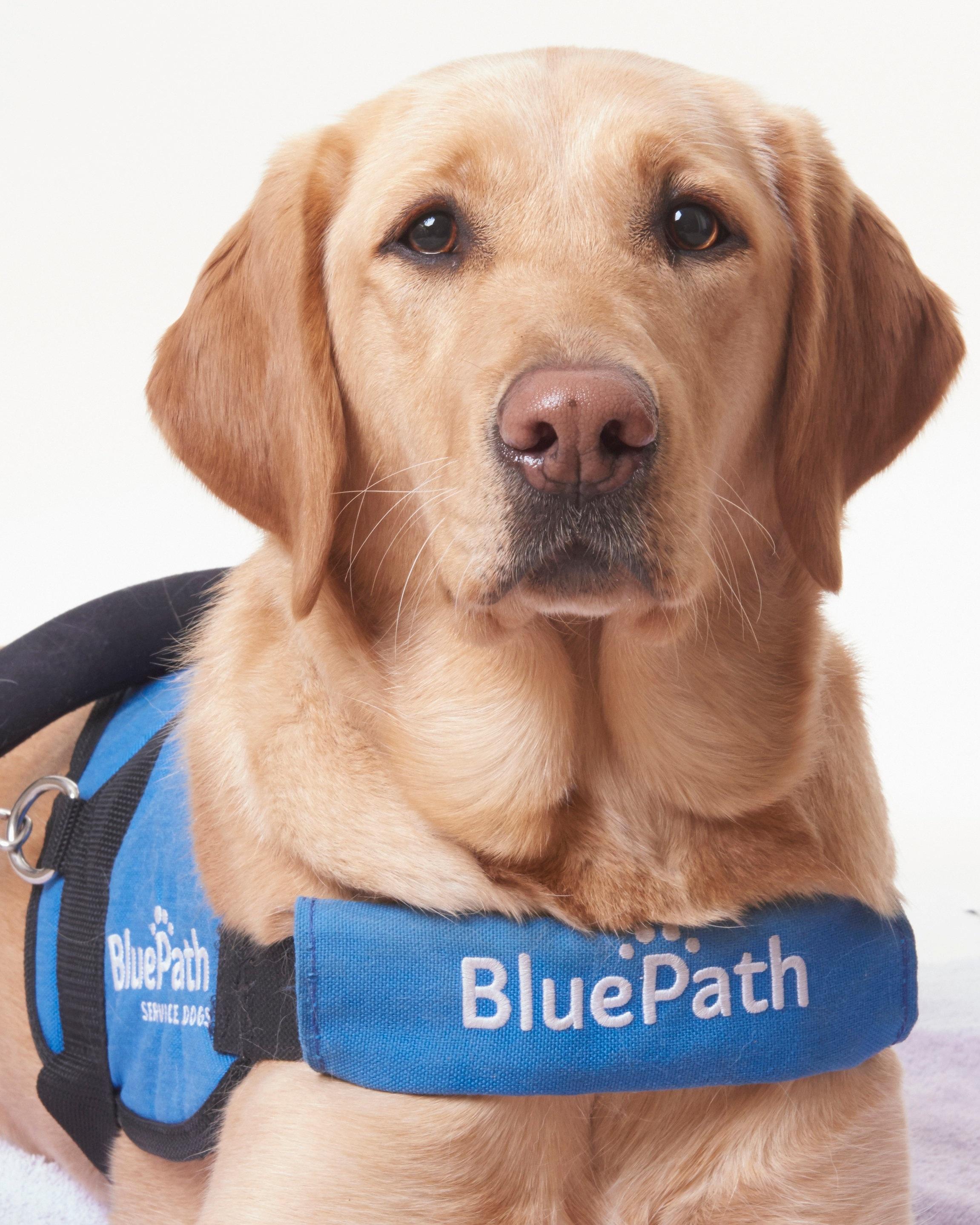 BluePath service dog, Autumn