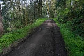 """My church"", where I often run in the woods. Leif Erickson Trail, Forest Park, Portland, OR"