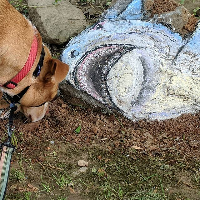 Kaya almost finds a shark! My morning walk, an artist leaves a picture.