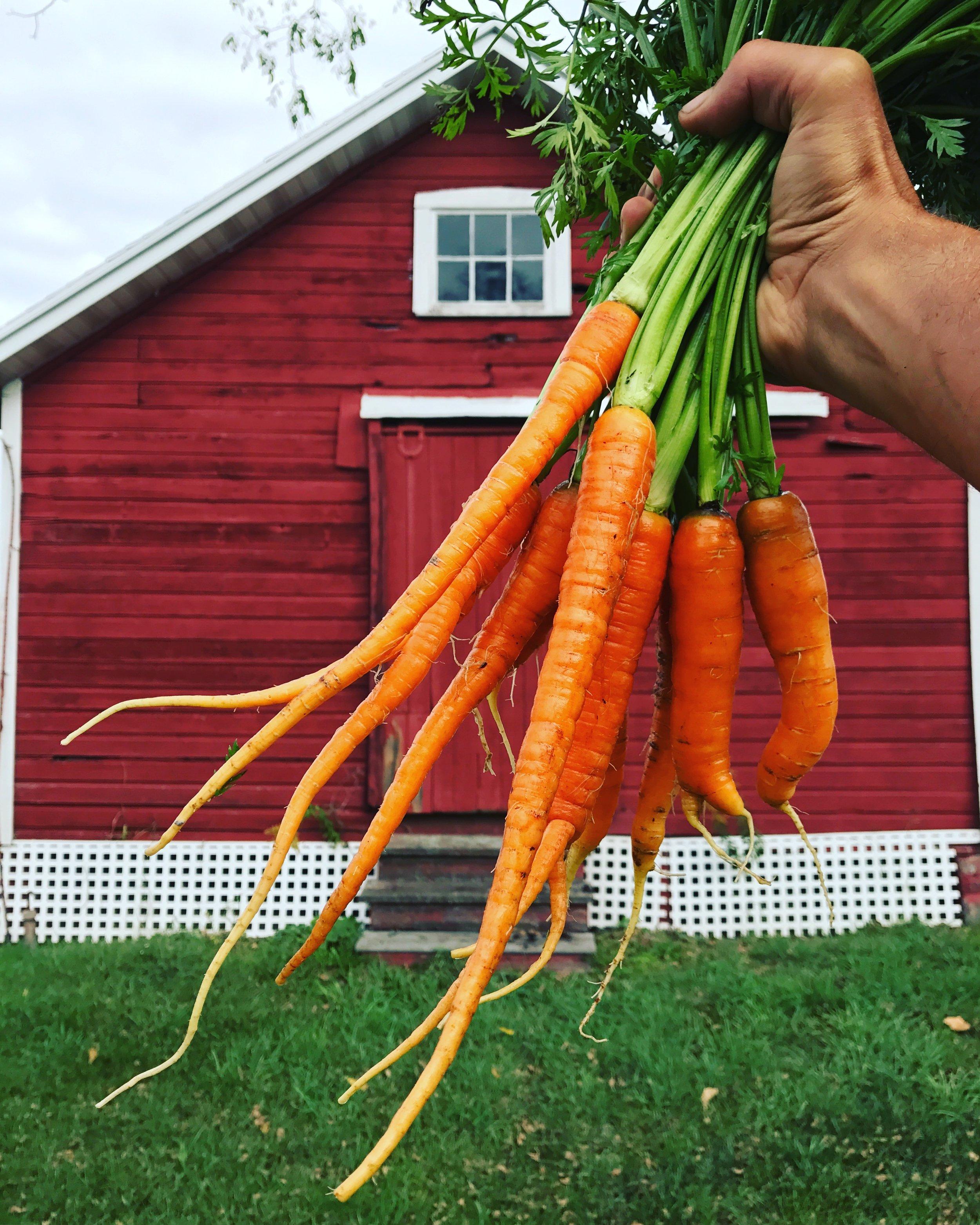 Carrots barn 17.jpg