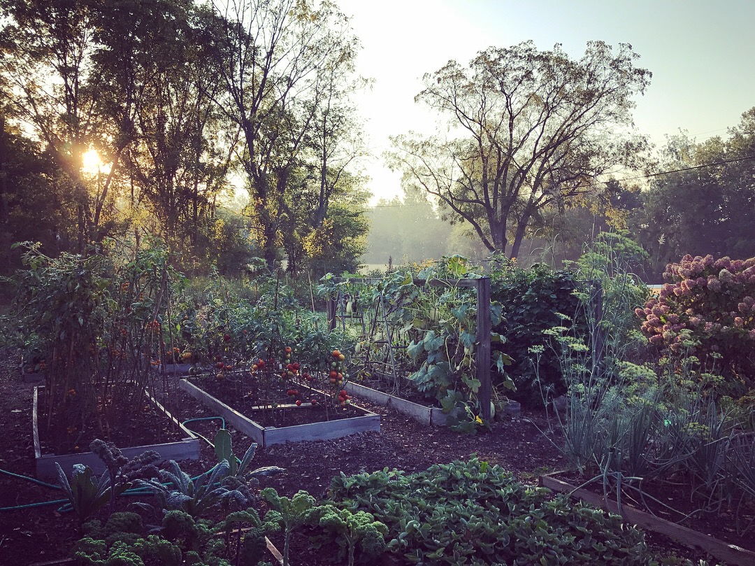 Sunrise over the vegetable beds