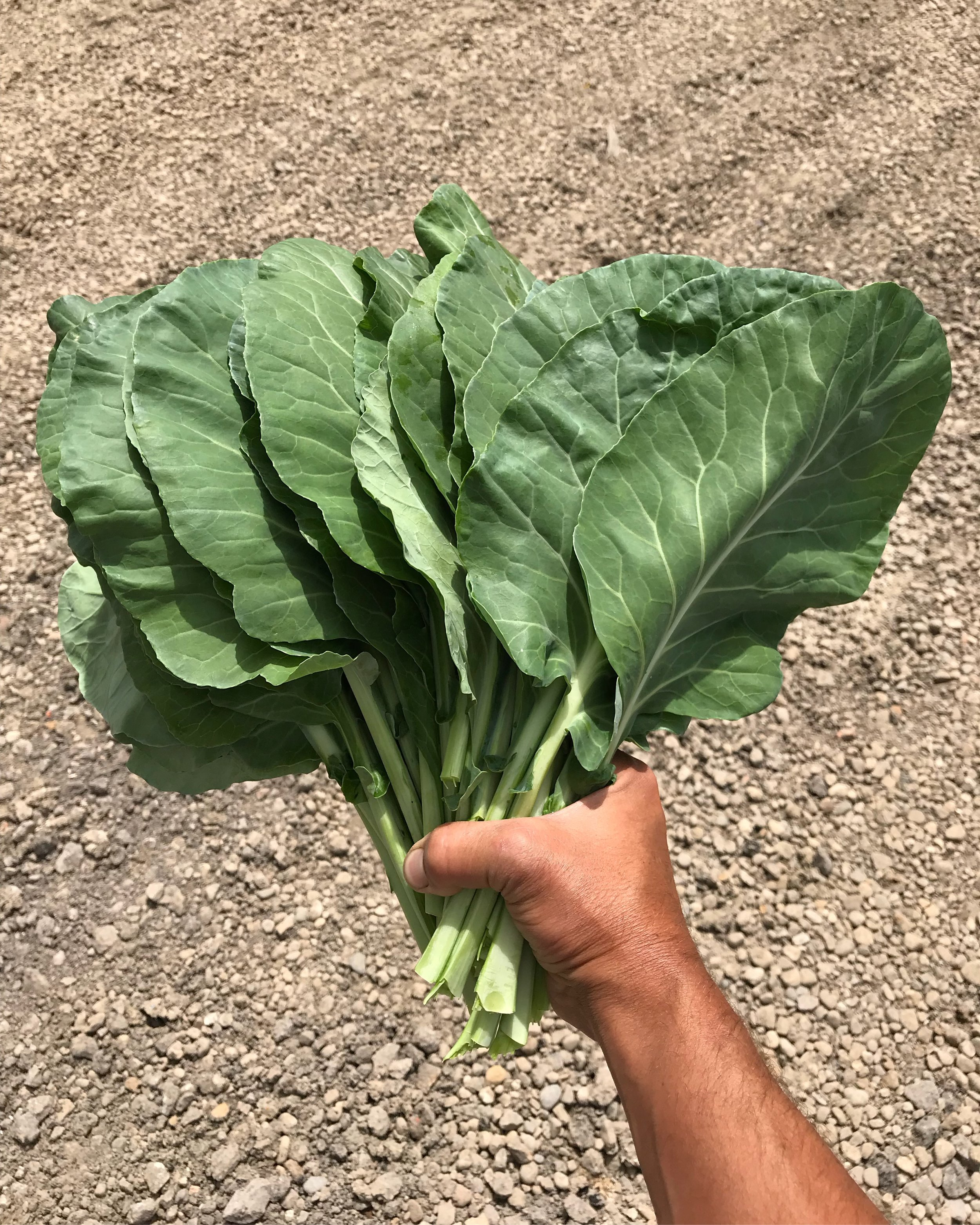 Collard powered!