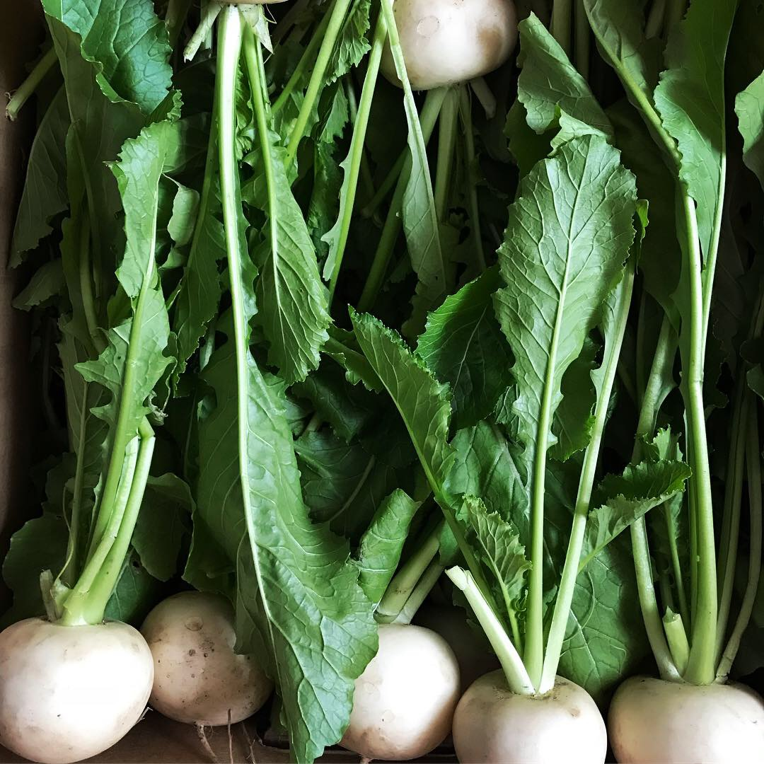 December turnip donation