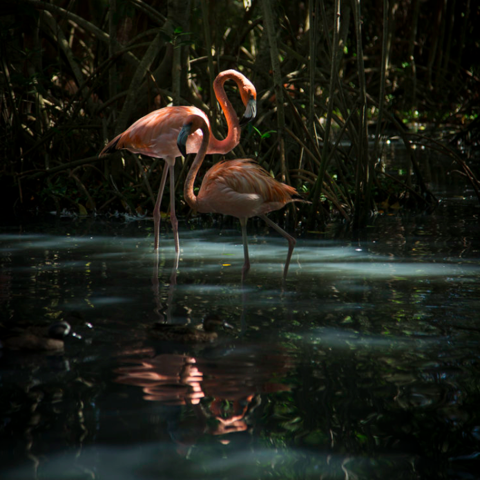 Flamingos /// Photograph by Carina Hessmer