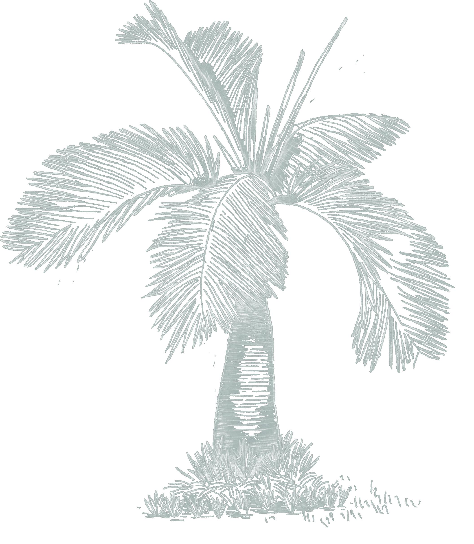 Palm Kopie_weiss.png