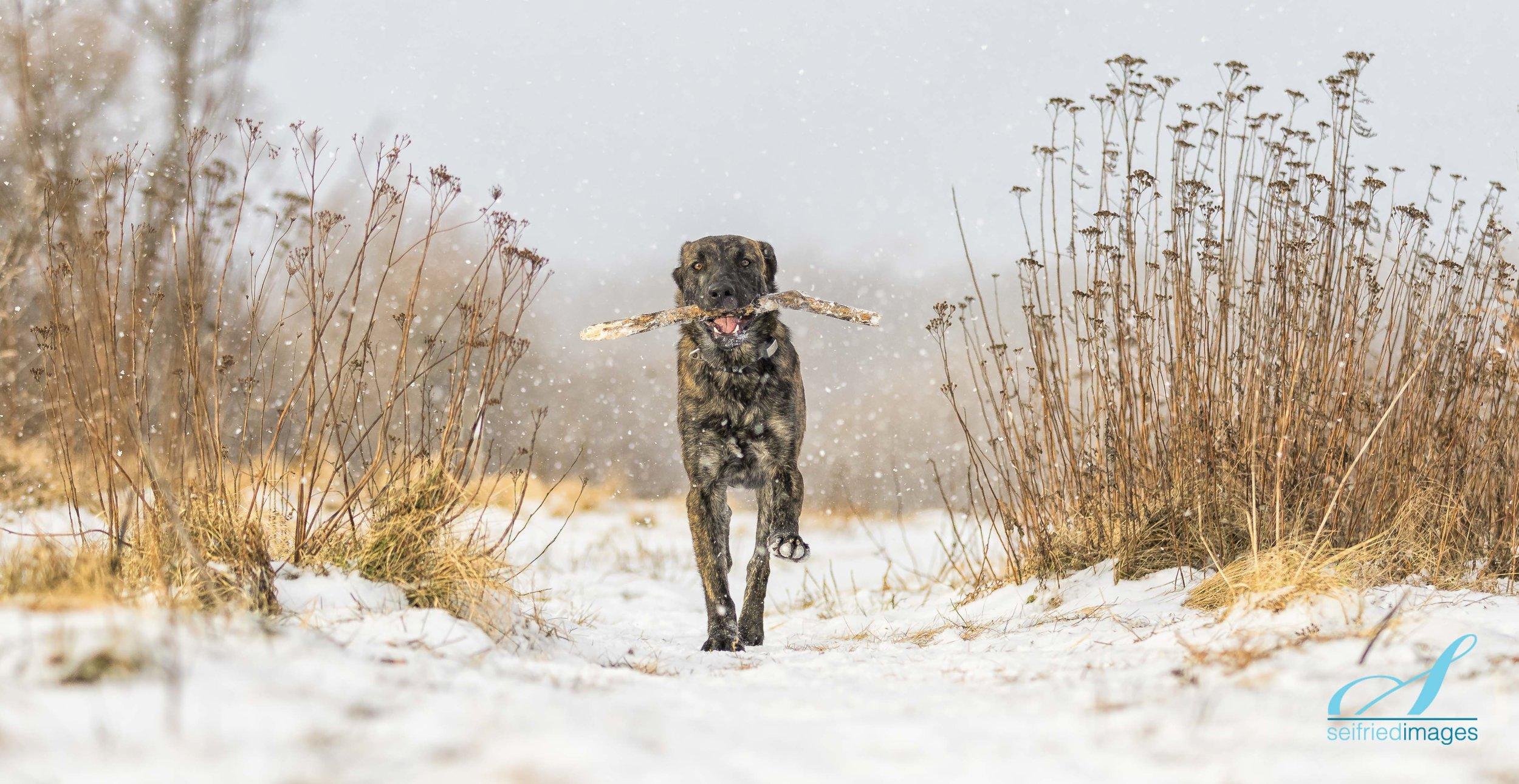 Snow and Stick