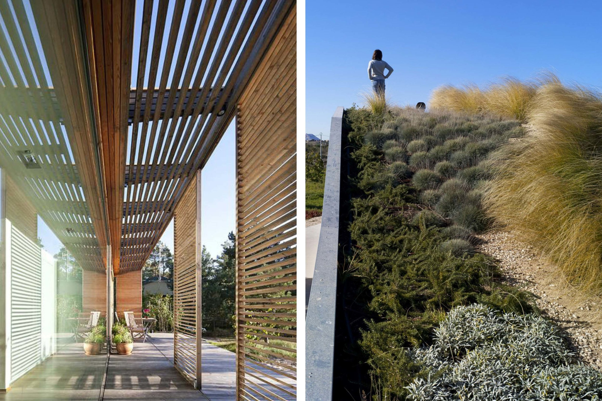 Moden archtiecture and landscaping