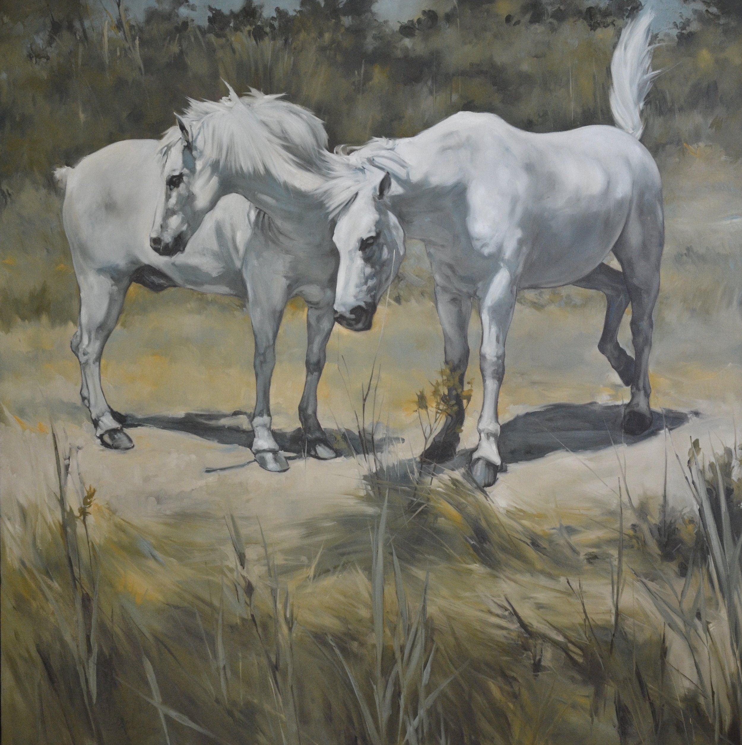 Horses Of Southern France