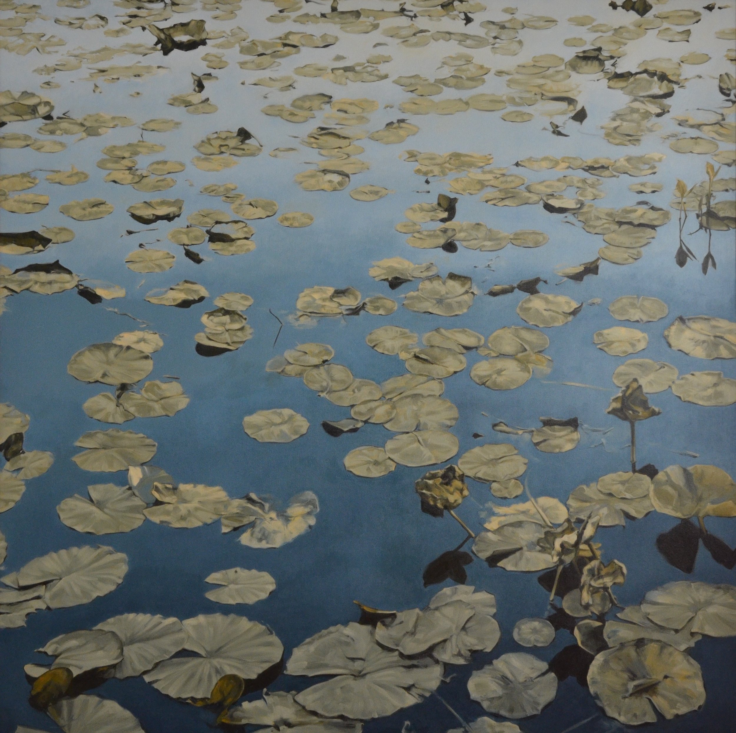 Water Lily Pads And Sky